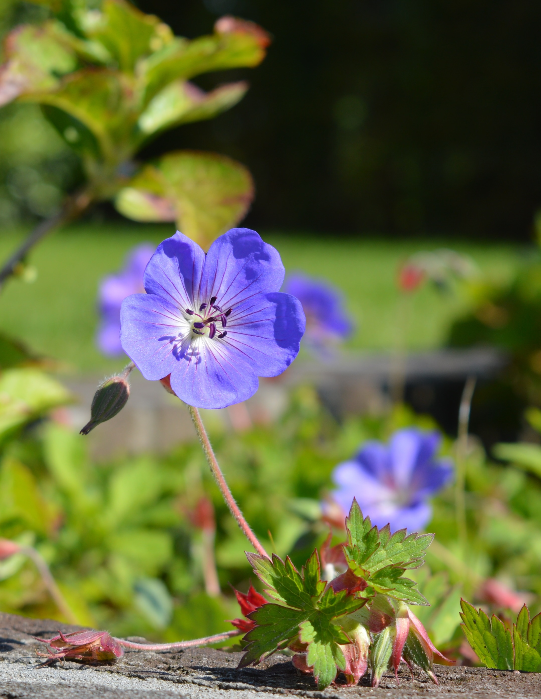 bloemen Barneveld