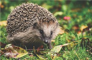 Hoe zorg je voor een diervriendelijke tuin?