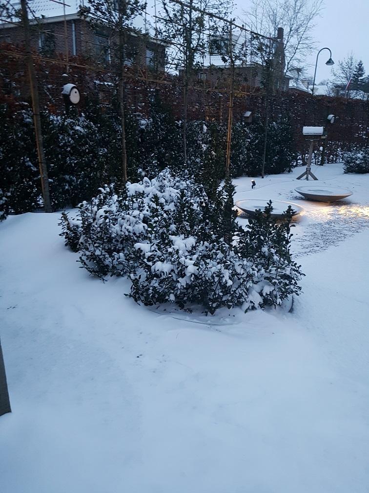 tuin voorbereiden winter